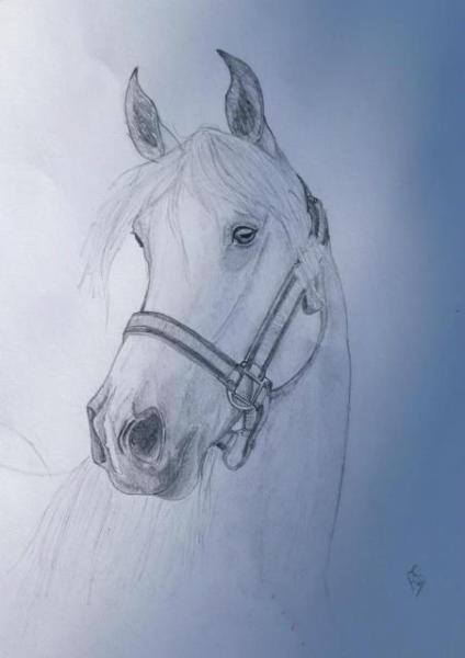 dibujo-de-caballo-Keturah-Snelling