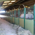 Horse stables in Gandia