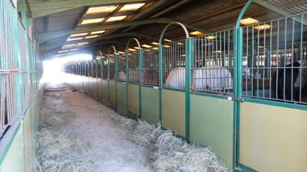 SOME OF THE AIR CONDITIONED STABLES