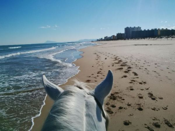 Gallops-on-the-beach-Gandia