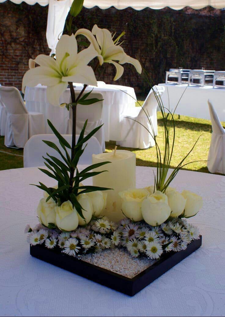 5 plantas para centros de mesa distinguidos y coloridos