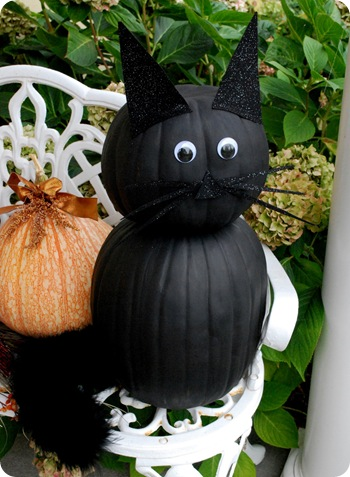 black pumpkin cat