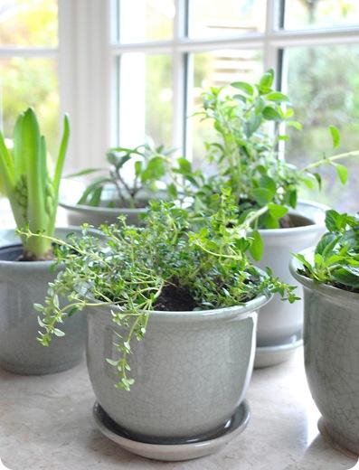 Happiness Is An Indoor Herb Garden Centsational Style - In home herb garden