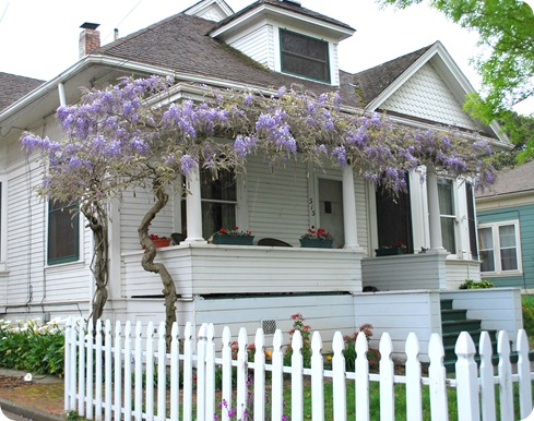white fence and wisteria