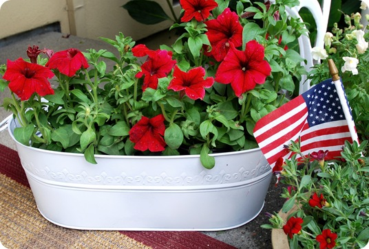red petunias in bin