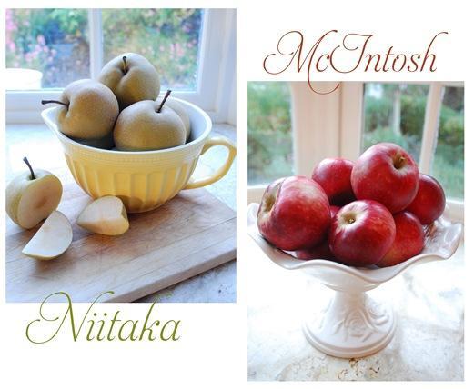 apple farm pears and apples