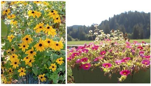 korbel gardens