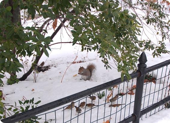 ny squirrel