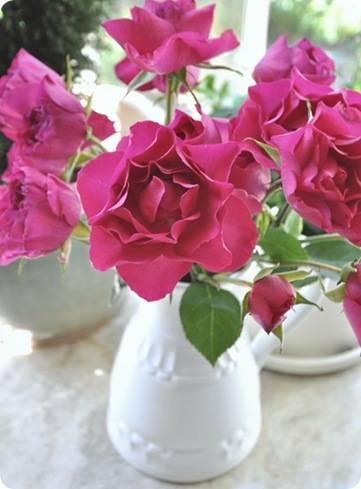 fuscia-roses_thumb2