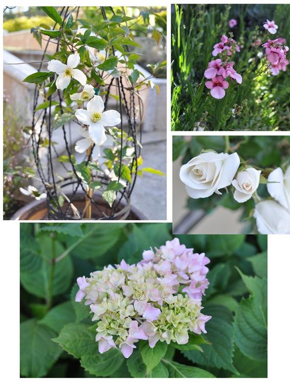 kates garden 2
