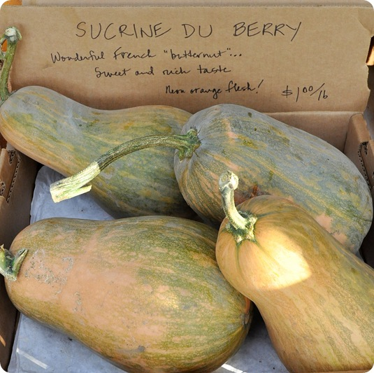 french butternut squash