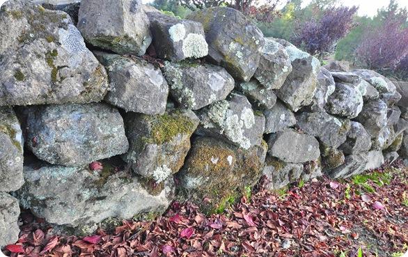 rock wall fallen leaves