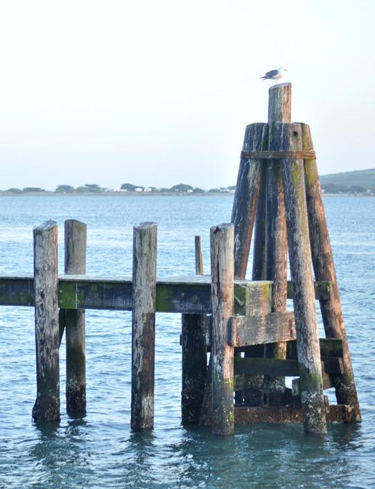 bodega wharf