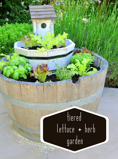 lettuce and herb garden