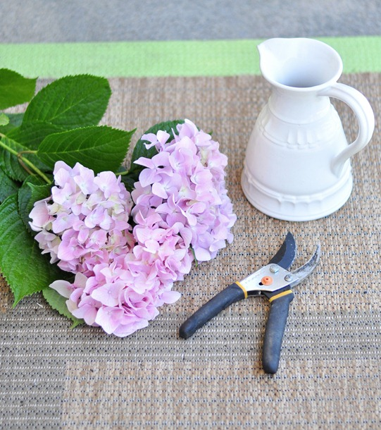 clip hydrangeas place in water right away