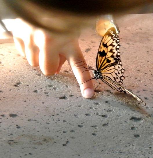 butterfly on girls finger