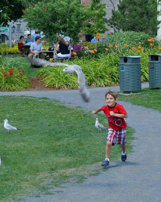 kid chasin pigeons