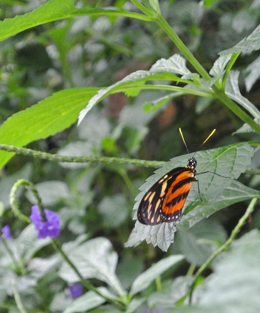 orange butterfly on leaf