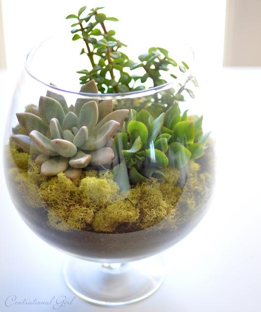 terrarium in apothecary jar
