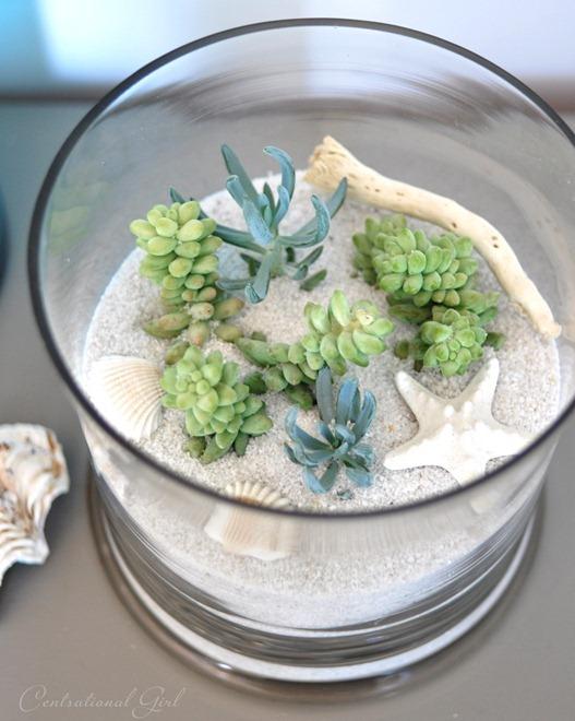 white sand terrarium