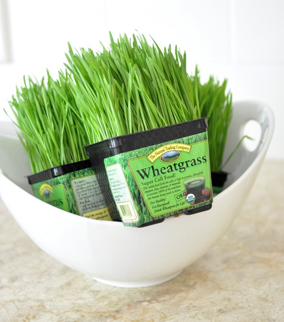 wheatgrass from market