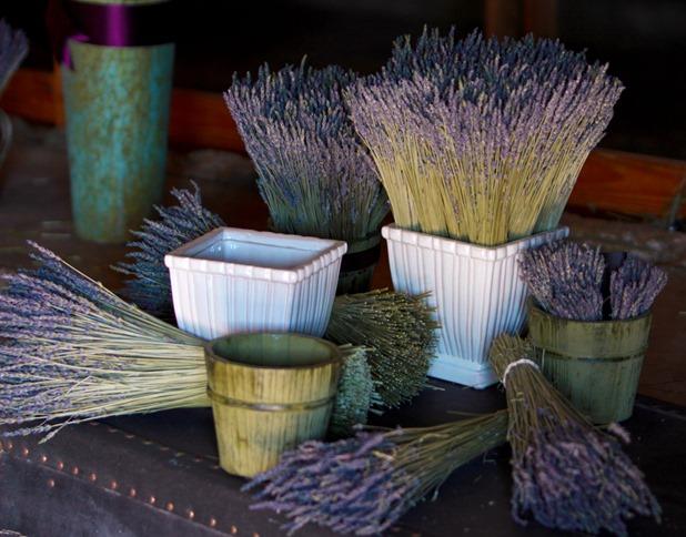 Lavender in Bundles