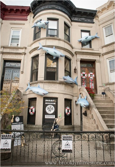 shark attack brooklynlimestone