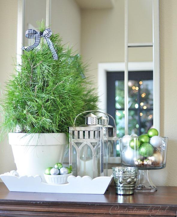 pine tree in white pot