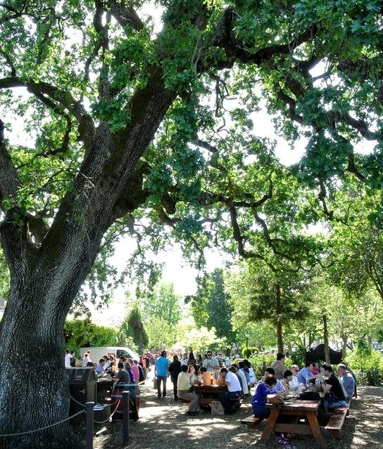 v sattui picnic grounds