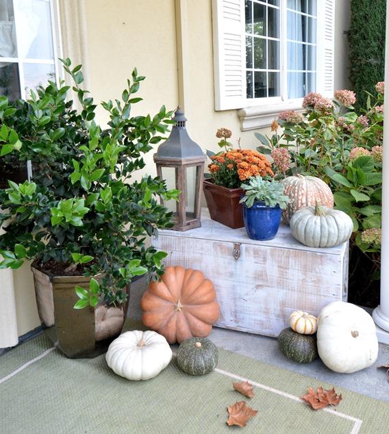 pumpkins on trunk