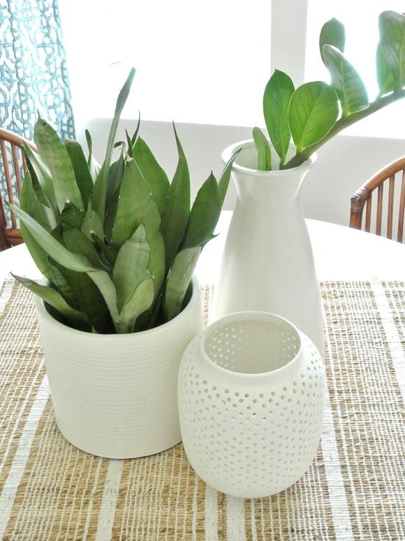 botanicals white vases