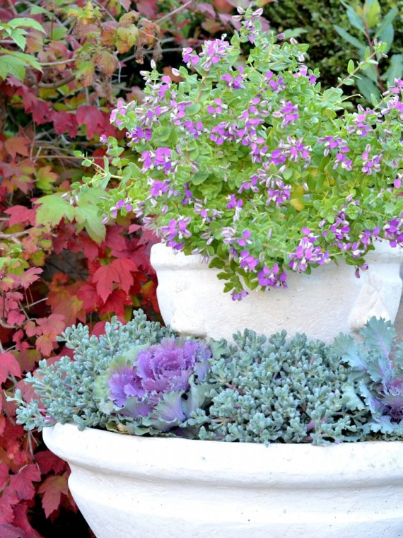 plants in fountain