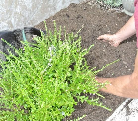 prep soil