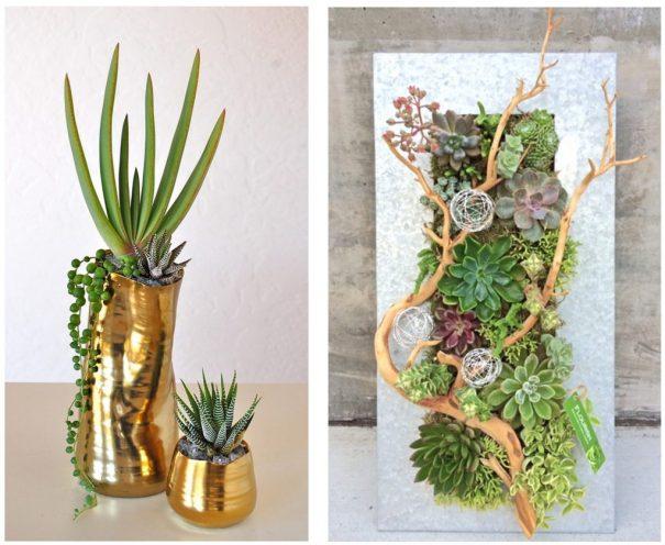 flourish succulents