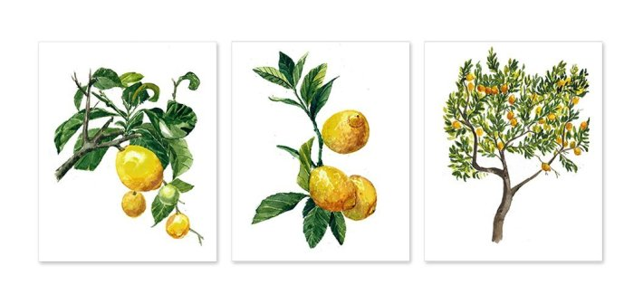 farmhouse lemon decor- lemon botanicals