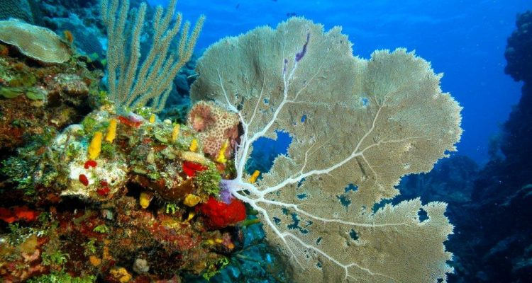 Colorful Diving, Roatan