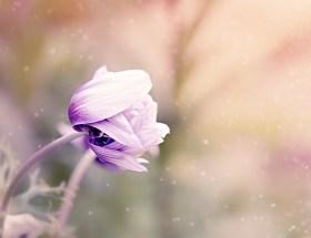 Le bouquet du dimanche #17 : un peu de tout, de rien et surtout un petit bouquet à partager en toute amitié pour célébrer le week-end ♥ #VivreMieux