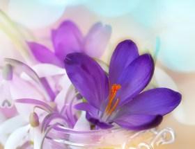 Le bouquet du dimanche #20 : un peu de tout, de rien et surtout un petit bouquet à partager en toute amitié pour célébrer le week-end ♥ #VivreMieux