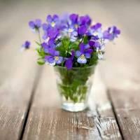 Le bouquet du dimanche #22