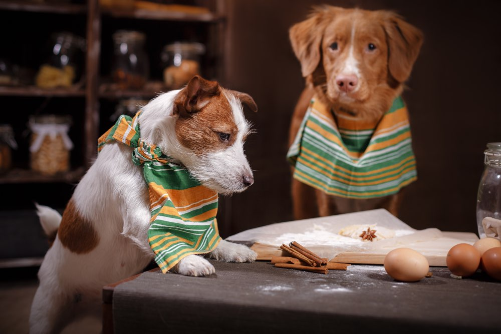Image result for dogs eating at table