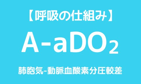 aado2,正常値