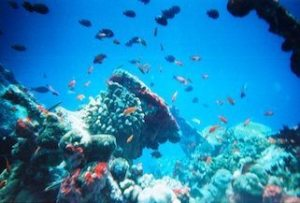 fish around a coral reef