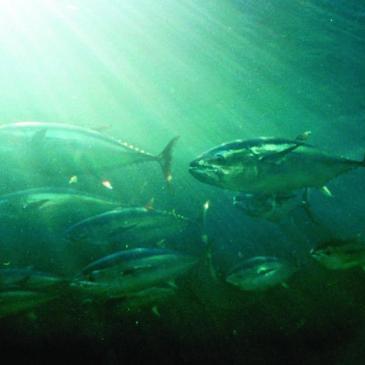 Salvar la vida marina, frenar la pesca ilegal