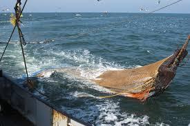 Científicos advierten de los riesgos de las generalizaciones para regular la pesca en las aguas profundas internacionales