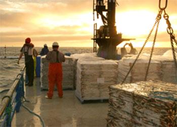 Crece la producción pesquera y acuícola