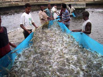La acuicultura brasileña crece 123 % en una década