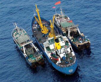 Investigadores recomiendan prohibir transbordos en el mar para frenar pesca ilegal