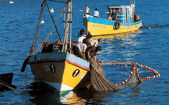 Chile: Pesca ilegal de merluza equivale a dos veces la cuota de extracción autorizada