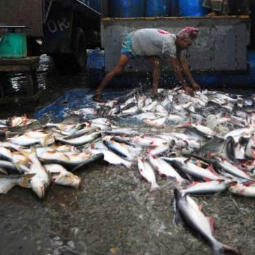 La ONU quiere recortar los multimillonarios subsidios pesqueros