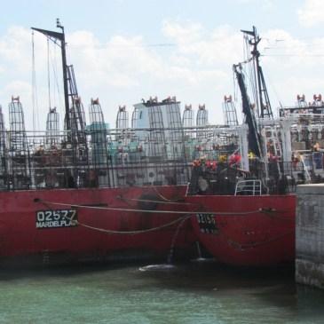 Suspenden despachos para operar sobre calamar al sur del 44°